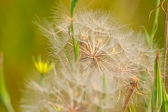 Weeds_and_Seeds_-_N0010