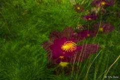 Garden_Colour_P0006