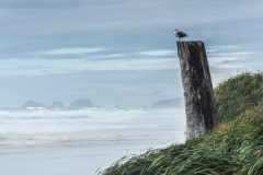 Oregon_Coast_-_S0008